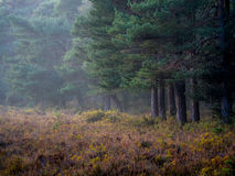 New forest Royalty Free Stock Photos