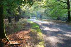 New Forest Drive in Autumn. Winding road through autumn forest, New Forest national park, Hampshire Stock Photo