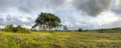 The New Forest Evening Stock Image