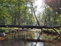 The New Forest. Fallen tree Blackwater The New Forest Royalty Free Stock Photos