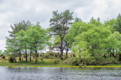 New Forest Lake. A view of Hatchet Pond in the new forest national park Stock Image