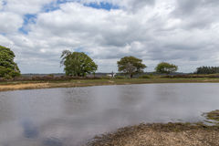 New Forest landscape with lake, trees and horse with rider royalty free stock photos