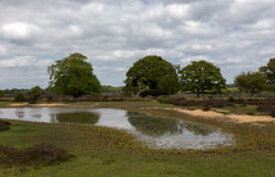New Forest landscape stock photo