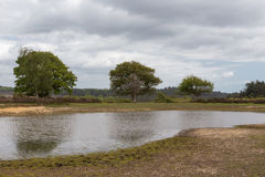 New Forest Pond, tranquil and peaceful Stock Images