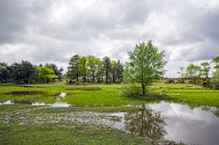 New Forest Pond. A pond and woodland in the New Forest National Park Royalty Free Stock Photography