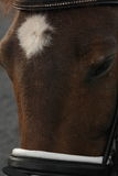 New forest pony head Stock Images