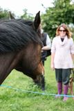 New Forest pony looking at his owner, ready to be given a treat. royalty free stock photography