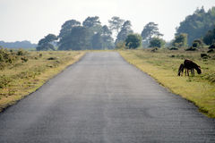New Forest road Royalty Free Stock Photos
