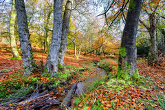 New Forest Stream in Autumn Stock Image