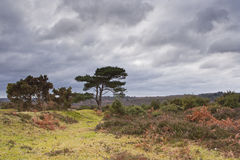 New Forest tree Stock Photo