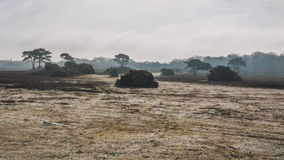 New Forest Vista. Looking across heathland in the New Forest national park royalty free stock photo