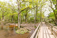 New Forest Woodland Stream. Water flows through woodland in the new forest national park Stock Images