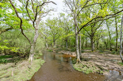 New Forest Woodland Stream. Water flows through woodland in the new forest national park Royalty Free Stock Photo
