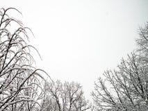 New fresh snow on branches of trees in winter scene. In Bemidji Minnesota Stock Photos