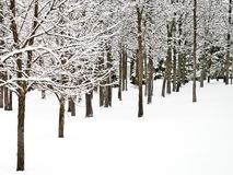 New fresh snow on branches of trees in winter scene. In Bemidji Minnesota Royalty Free Stock Photos