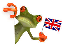 New frog Stock Photography