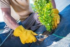 New Garden Trees Planting. Men Creating Beautiful Garden royalty free stock photos