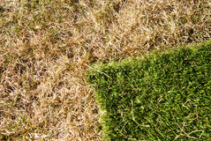 New grass Royalty Free Stock Photography