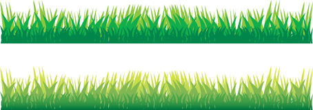 New grass Royalty Free Stock Photo