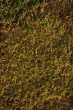 New grass background Royalty Free Stock Photo