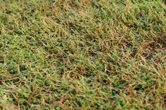 New grass closeup Royalty Free Stock Images
