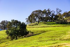 New grass grown on burnt area after the rain, Calero County Park, south San Francisco bay area, California royalty free stock photo