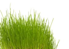 New green grass Stock Images