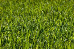 New green grass. Meadow background. Shallow depth of field Royalty Free Stock Photography