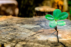 New green leaves born on old tree, textured background , nature stock photo,select focus Stock Photos