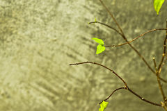 New green leaves growth instead old leaves falling and concrete background, new life Royalty Free Stock Photos