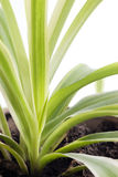 New green plant growing Stock Photo