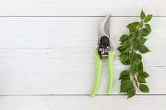 New green secateurs on white wooden. Top view. New green secateurs on white wooden background. Top view Royalty Free Stock Photo