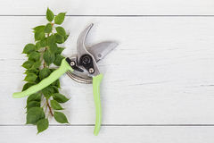 New green secateurs on white wooden. Top view Royalty Free Stock Photo