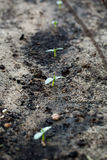 New green sprout growing in summer garden. Stock Photo