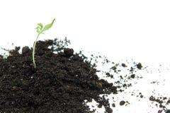New green startup Stock Photo