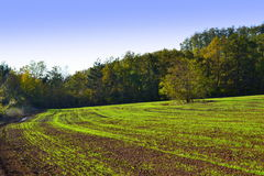 New grown green crops field Royalty Free Stock Images