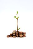 New Growth. Green shoots with coins on white Stock Photo