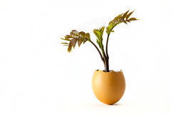 New growth. An egg shell with a plant growing from it that is a concept of new growth and beginnings Stock Photos