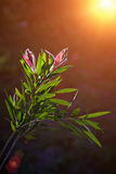 New growth. Reaching for light, flower and leaves Stock Photos