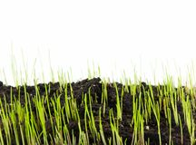 New Growth. New grass sprouting up from the soil Royalty Free Stock Photos
