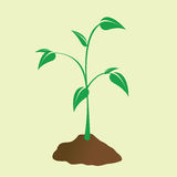 New Growth Royalty Free Stock Photo