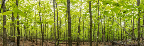 New Growth on The Appalachian Trail Panorama Stock Images