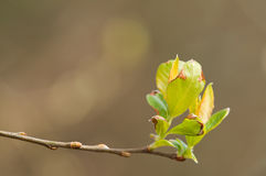 Spring bursting out all over. New growth as spring arrives in april royalty free stock image