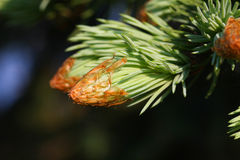 New growth bud Royalty Free Stock Photography