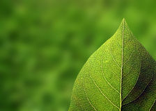 New growth. Closeup of single leaf with out of focus vegetation in background Stock Images
