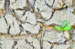 New Growth in Cracked Earth Stock Images