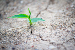 New Growth in Cracked Earth Stock Photography