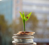 New growth money concept Stock Photo