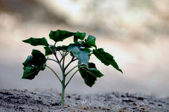 New Growth Plant Stock Image