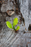 New growth on tree. Close-up Stock Photos
